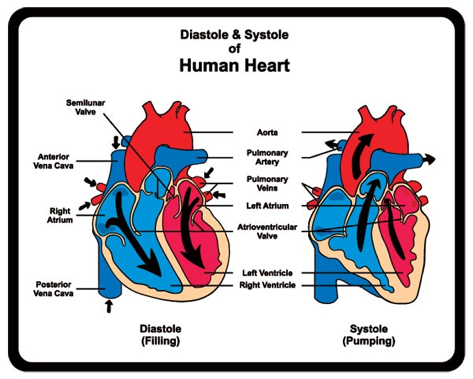 The meaning behind systolic and diastolic blood pressure.